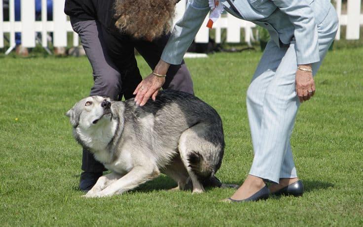 HARVARD DOG BEHAVIORIST AND PHOENIX DOG TRAINER
